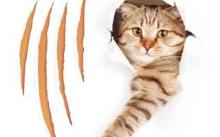 Что делать, если кот дерет обои, как правильно отучить от вредной привычки, используя подручные средства и не только