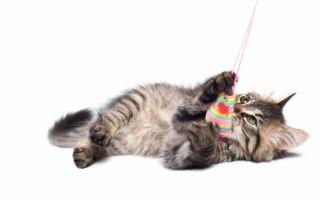 Как правильно ухаживать за котенком — советы и рекомендации