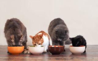 Можно ли давать кошкам куриную печень