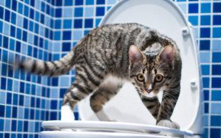 Обращаем внимание на то, как правильно приучить кошку к унитазу