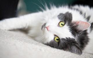 С какого возраста кошка начинает просить кота