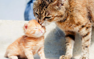 Всех ли котят родила кошка — как понять