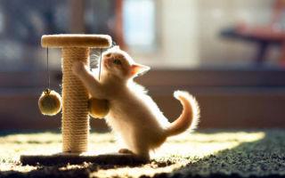 Приучаем котенка к когтеточке – советы и рекомендации специалистов по воспитанию любимца