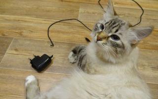 Как можно отучить кошку грызть провода
