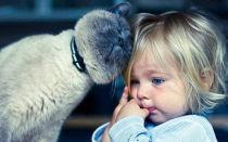 У кошки глисты можно ли заразиться человеку от домашнего питомца