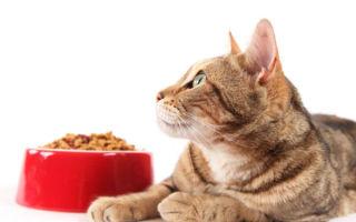 Рекомендации опытных заводчиков и ветеринаров, как правильно кормить домашнюю кошку, выбираем систему питания