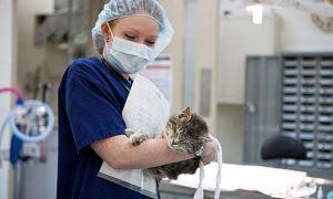 От чего могут быть кровянистые выделения у кошки