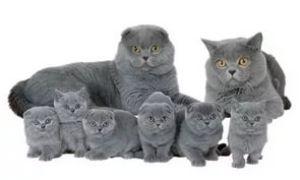 Когда и как можно проводить вязку котов и кошек