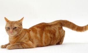 Домашние питомцы: сколько дней гуляет кошка