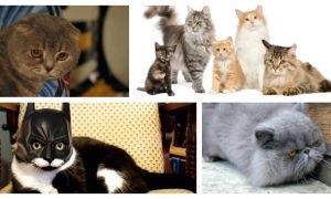 Интересные клички для котов и кошек