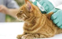 Какие прививки котятам нужно делать и в каком возрасте