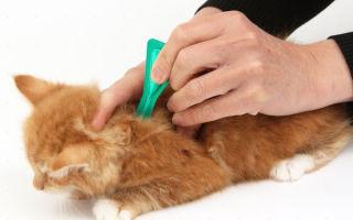 Как легко и безопасно избавить кошку от блох