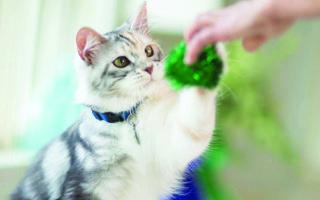 Как правильно и успешно дрессировать кошку