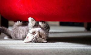 Как отучить кота драть мебель — действенные способы