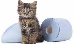 Почему появляется понос у котенка с кровью