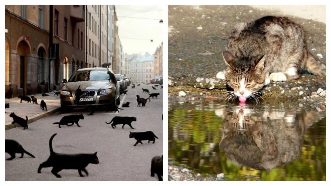 причины заражения котов глистами