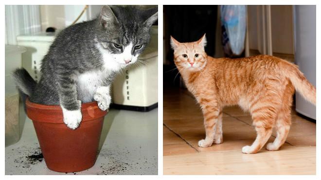 как отучить кошку и кота гадить в неположенном месте