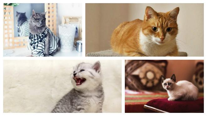 Кличка кота с буквами кс