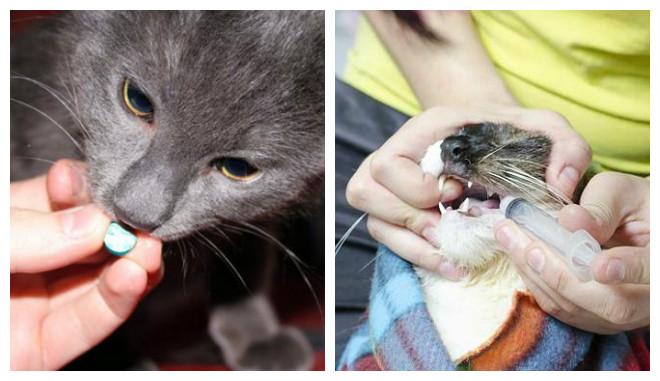 лечение глистов у котов