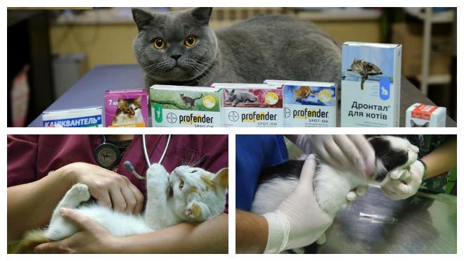 лечение глистов у кошки