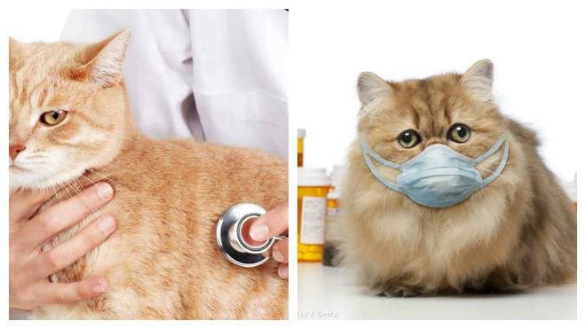 лечение кошек от чиха