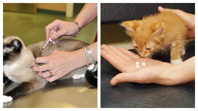 лечение кошек от чумки дома