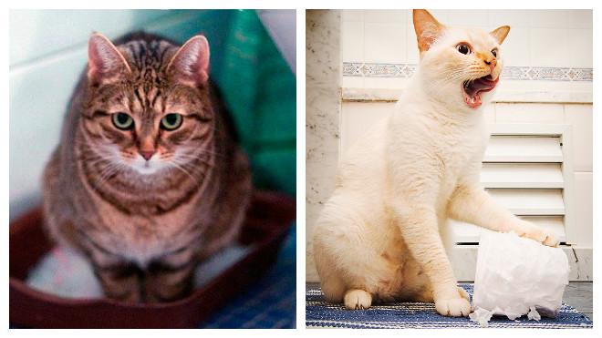 понос у кошек
