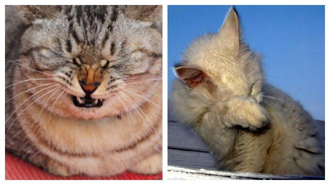 Кошка чихает и похудела