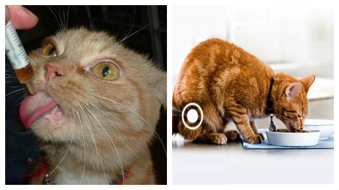 профилактика цистита у кошек