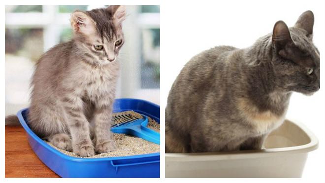 Что поможет коту от запора в домашних условиях 702