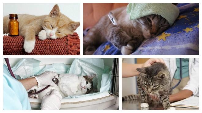 проявление болезни кошек
