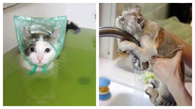 как правильно купить котов