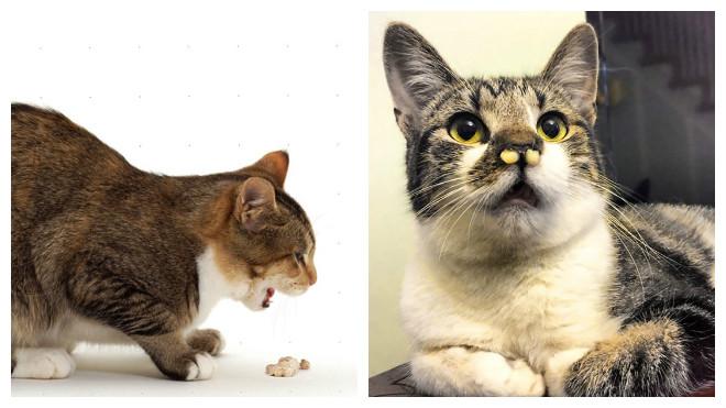 Незаразные болезни кошек
