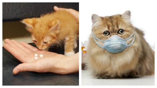 лечения насморка у кота
