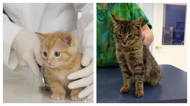 лечение поноса у котов