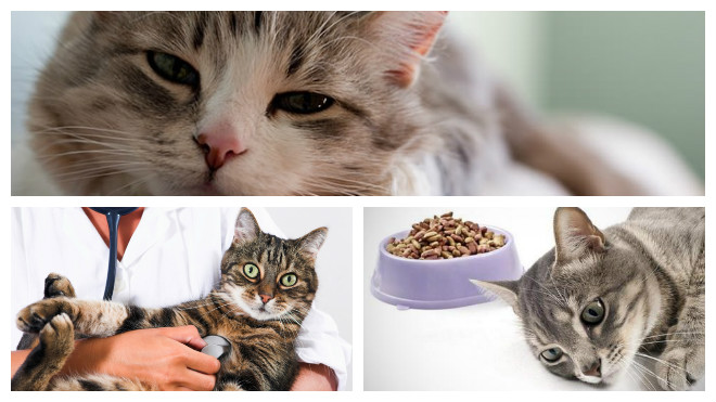 патологии у кошек