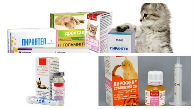 антигельминтное лечение котов