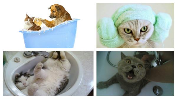правила купание котов