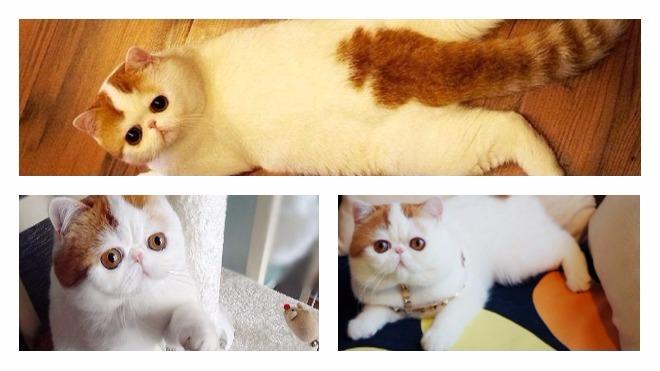 характер снупи кота