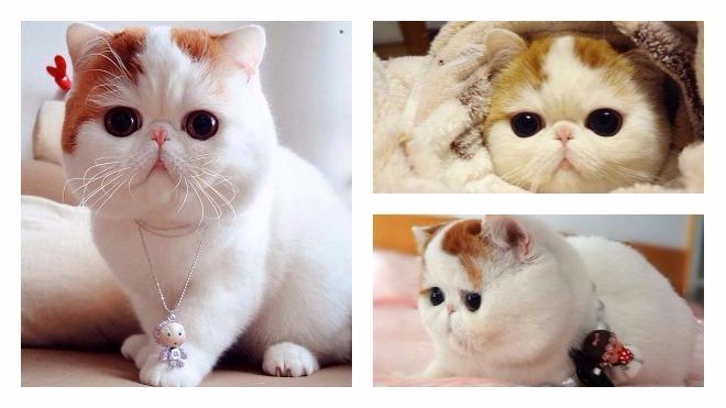 снупи кот