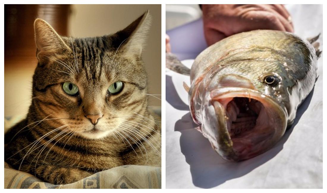 Пути заражения кошки