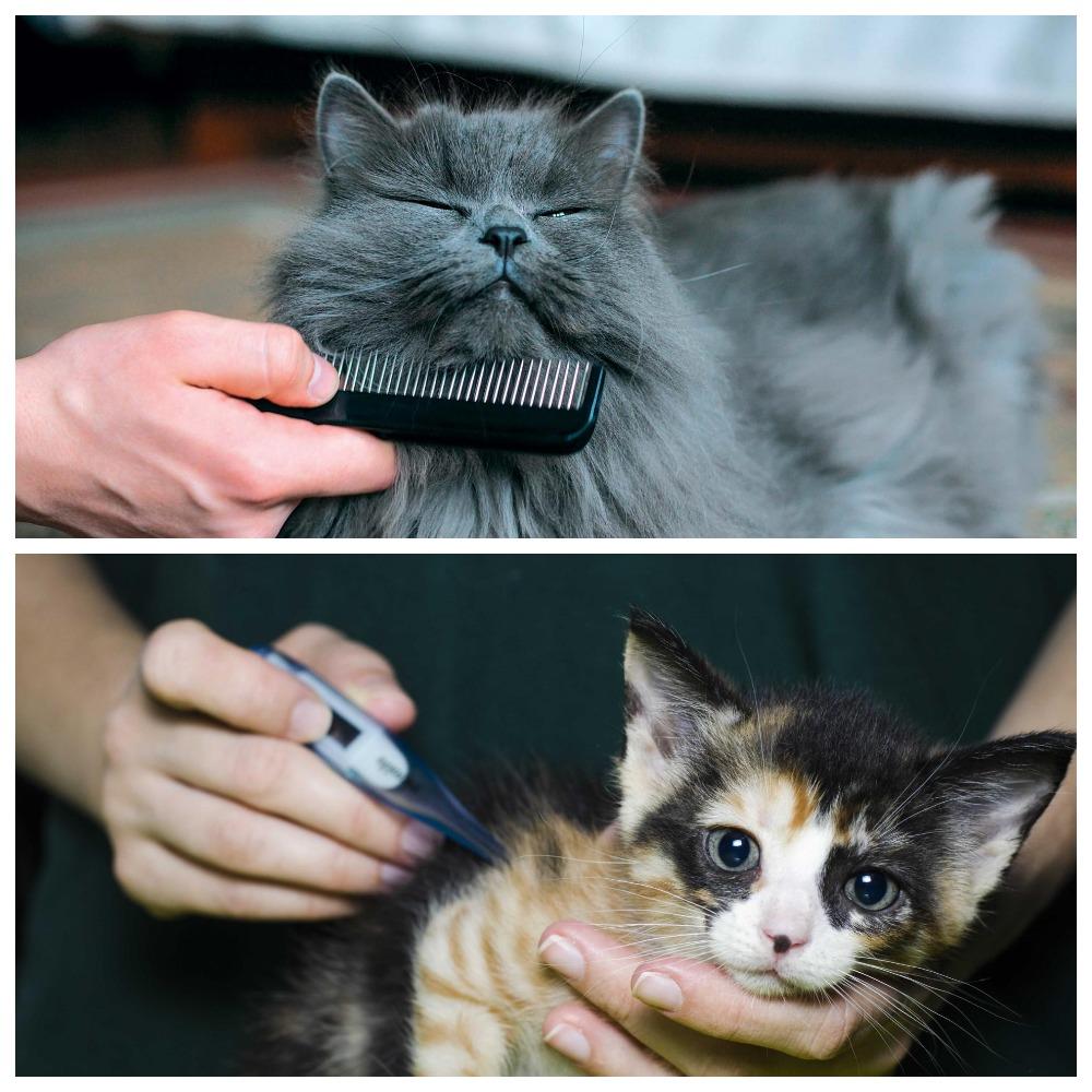 У кошки блохи - пошаговая инструкция по выведению