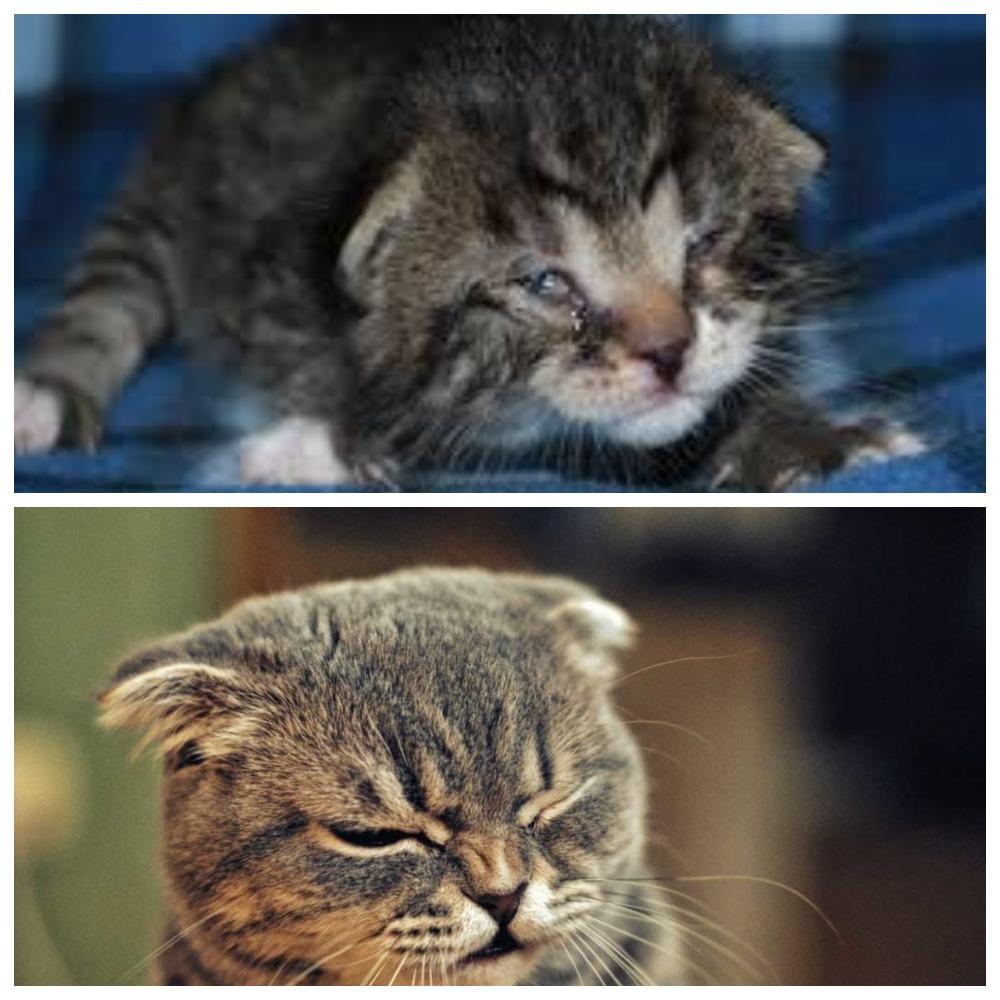 Кот простыл, чихает - что делать, как правильно лечить?