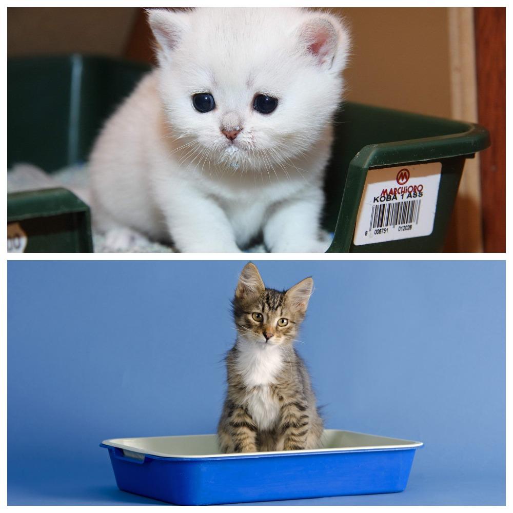 Как правильно ухаживать за котенком - советы и рекомендации
