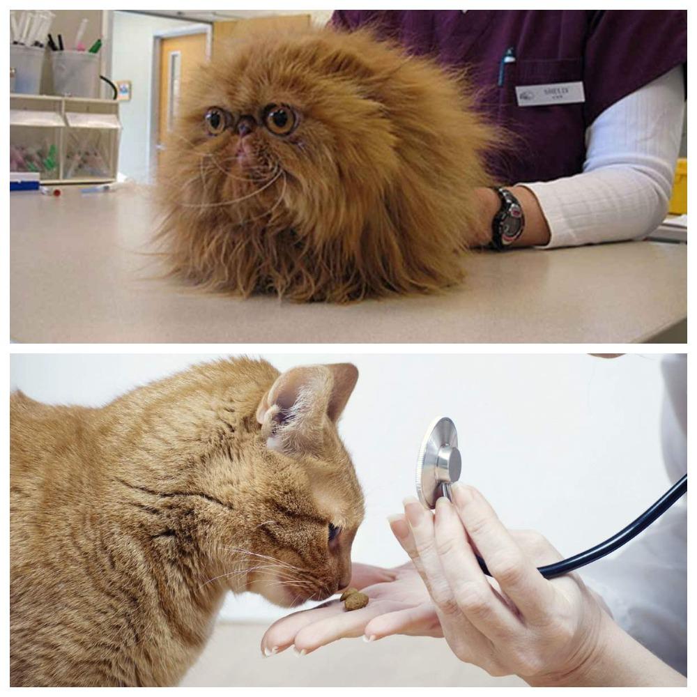 Обзор лучших таблеток от глистов для кошек