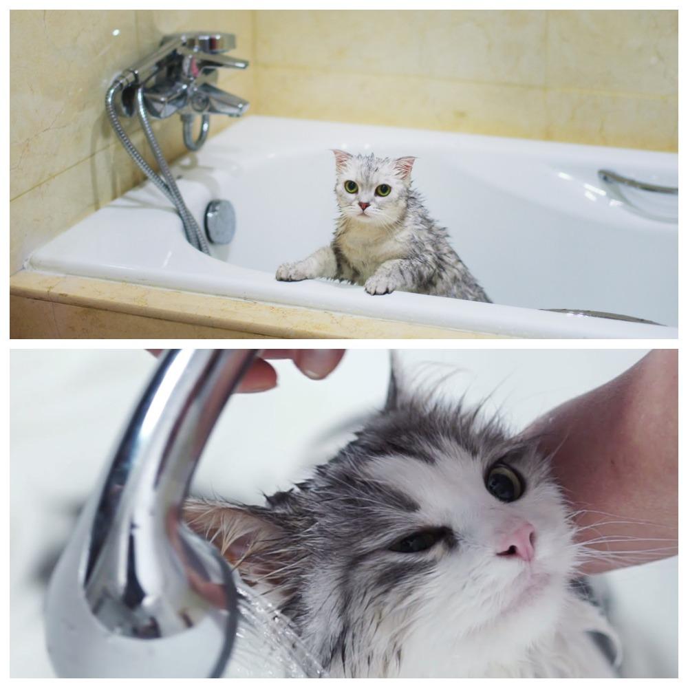 Как часто мыть кошку