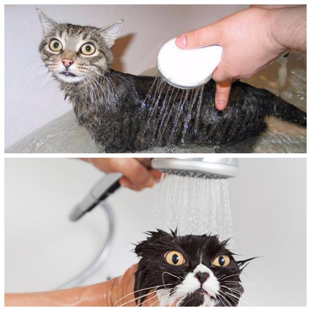 Как часто и какими средствами можно мыть кошку