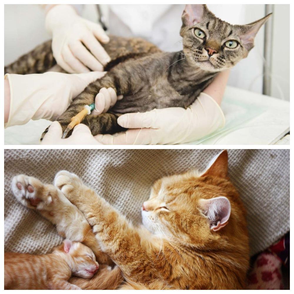 Кровяные выделения у кошки до и после родов