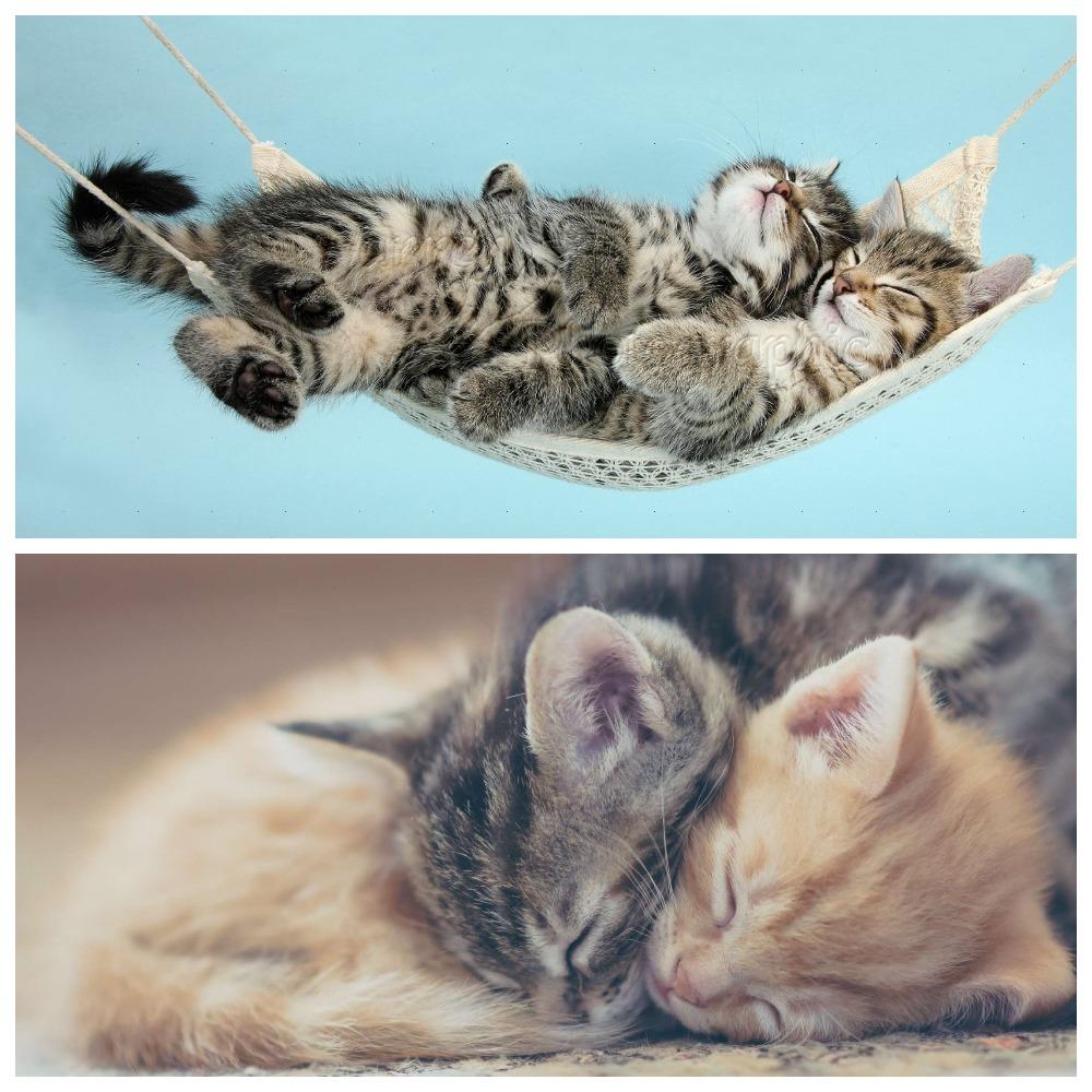 Котенок очень много спит – норма или признак болезни