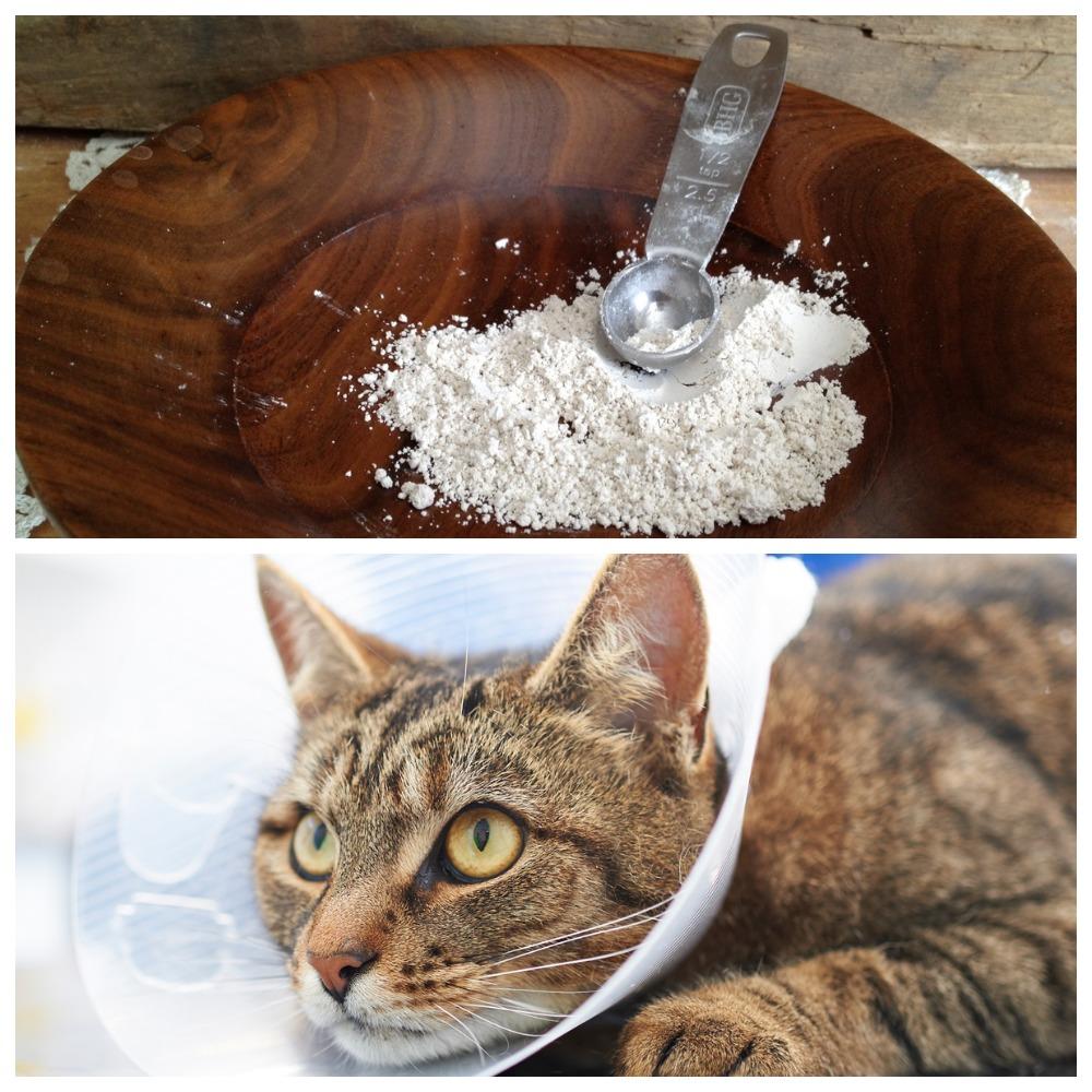 Можно ли давать кошкам пирантел
